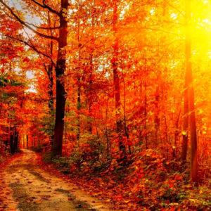 Заканчивается акция «Золотая осень» от «Авангард»!